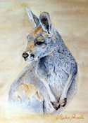 Watercolour Painting by Stephen Powell Kangaroo Joey