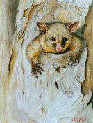 Oil Painting by Stephen Powell Brush-tailed Possum