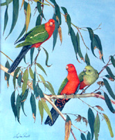 Watercolour Painting by Stephen Powell Australian King Parrot