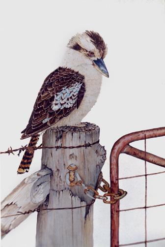Stephen Powell Wildlife Artist Kookaburra Gallery Page