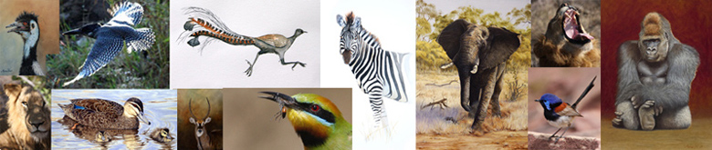 Stephen Powell Australian Wildlife Artist PHOTOGRAPHER - TUTOR - MOTIVATOR - WEBSITE DESIGNER banner