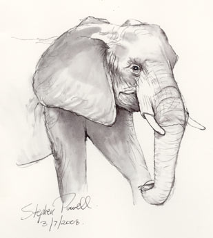 Pen and wash painting Elephant - South Africa by Stephen Powell