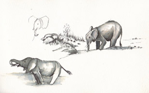 Elephant Drinking - field sketche Manyara Tanzania Pen and watercolour wash by Stephen Powell Wildlife Artist