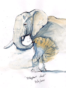 Elephent sketch by Stephen Powell wildlife artist