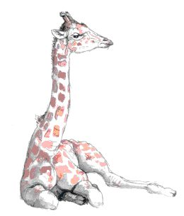 Giraffe   sketch by Stephen Powell wildlife artist