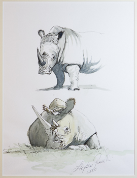 White Rhinoceros  sketch by Stephen Powell wildlife artist