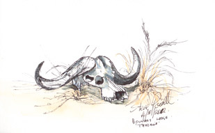 Buffalo Skull - Serengeti Pen and watercolour wash by Stephen Powell Wildlife Artist