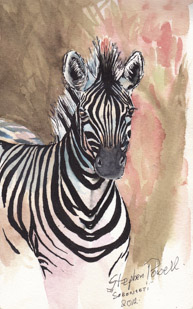 Zebra Segengeti Tanzania Pen and watercolour wash by Stephen Powell Wildlife Artist