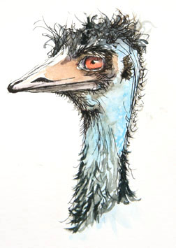 Watercolour Sketches Emu by Stephen Powell wildlife artist