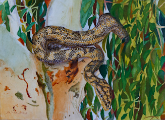 Snake Oil painting by Anne-Marie Hurley Student of Stephen Powell Wildlife Artist