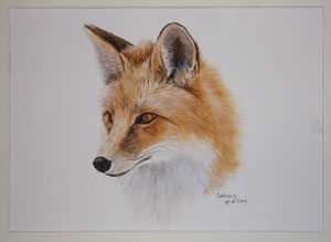 Fox by Catherin McMillan