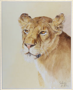 Lion by Catherin McMillan
