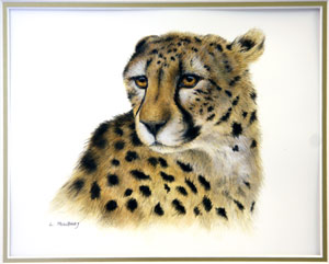 Cheetah by Linda Mowbray