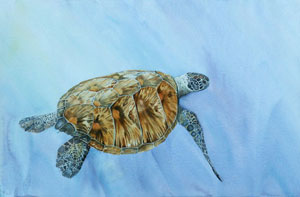 Turtle by Denise Illing