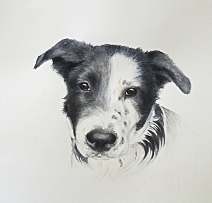 Dog by Grace Whitby. Watercolour. Workshop participant of Stephen Powell Wildlife Artist at Grafton Artsfest