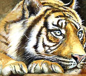 Tiger by Julianne Gosper. Workshop participant of Stephen Powell Wildlife Artist at Grafton Artsfest