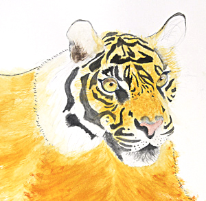 Tiger by Julia. Workshop participant of Stephen Powell Wildlife Artist at Grafton Artsfest