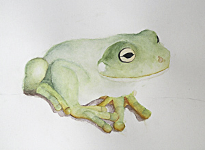 Frog by Julia. Workshop participant of Stephen Powell Wildlife Artist at Grafton Artsfest