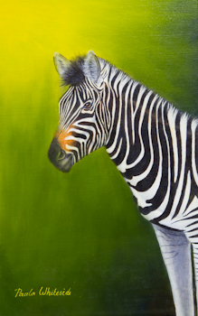 Zebra Oil painting by Paula Whiteside Student of Stephen Powell Wildlife Artist