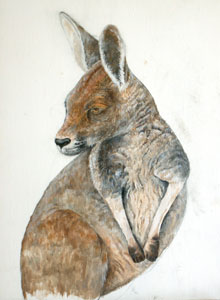 Kangaroo by Robyn Thompson