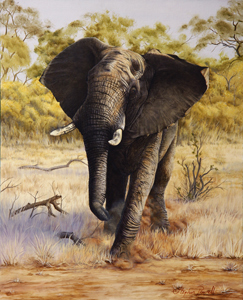 African Elephant Oil painting by Stephen Powell Makalali Game Reserve South Africa