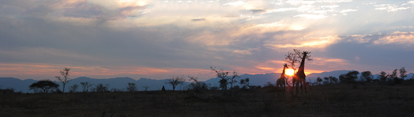 Giraffe Sunset taken on Steve Morvell & Stephen Powell African Residential Workshop 2010