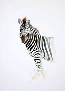 Zebra Watercolour painting by Stephen Powell Wildlife Artist