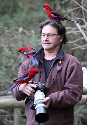 Stephen Powell Wildlife Artist and Crimson rosellas