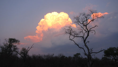 Thunderstorm over Kruger. Photo by Stephen Powell Wildlife Artist - Photographer