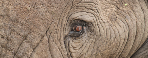 Elephants eye Photograph by Stephen Powell Wildlife Artist Photographer