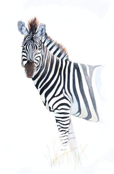 Zebra Watercolour by Stephen Powell Wildlife Artist