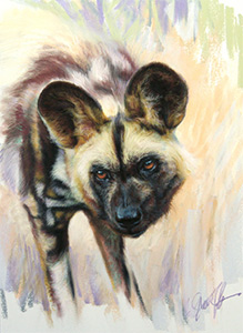 African Painted dog - Steve Morvell