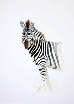 Zebra Watercolour painting by Stephen Powell Wildlife Artist