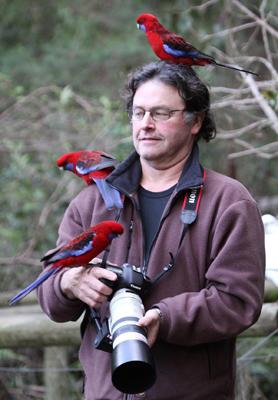 Stephen Powell Wildlife Artist and Crimson rosellas