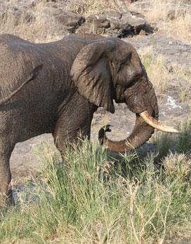Elephant bath Photo by Stephen Powell Wildlife Artist - Photographer