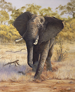 Elephant charge by Stephen Powell Wildlife Artist